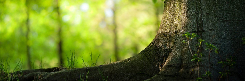Kajian Indramayu Pokok-pokok Aqidah Salaf